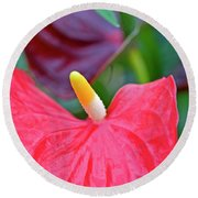 Red Anthurium Flower Round Beach Towel