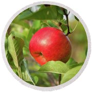 Red Apple On A Tree Round Beach Towel