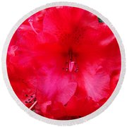 Red Azaleas Flowers 4 Red Azalea Garden Giclee Art Prints Baslee Troutman Round Beach Towel
