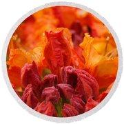 Red Azaleas Orange Azalea Flowers 9 Floral Giclee Art Prints Baslee Troutman Round Beach Towel
