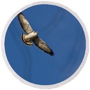 Red-backed Hawk Round Beach Towel