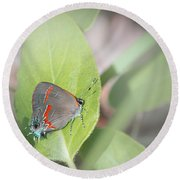 Red-banded Hairstreak Butterfly Round Beach Towel
