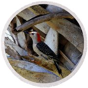 Red-bellied Woodpecker Hides On A Cabbage Palm Round Beach Towel
