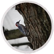 Red Bellied Woodpecker No 2 Round Beach Towel