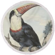 Red Billed Toucan, 1748  Round Beach Towel