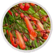 Red Blossoms Of A Firecracker Plant Round Beach Towel
