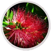 Red Bottle Brush Round Beach Towel