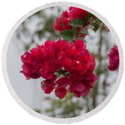 red bougainvillea in Laguna Guerrero Round Beach Towel