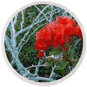 Red Bougainvillea Thorns Round Beach Towel