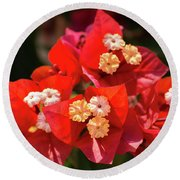 Red Bougainvillea  Round Beach Towel