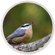 Red-breasted Nuthatch Round Beach Towel