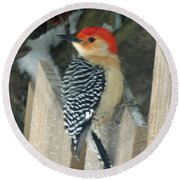Red Breasted Woodpecker On Fence Round Beach Towel