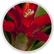 Red Bromiliad Round Beach Towel