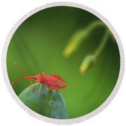 Red Bug On Green Round Beach Towel