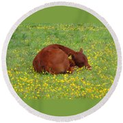 Red Calf In The Buttercup Meadow Round Beach Towel