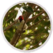 Red-capped Cardinal Digital Oil Round Beach Towel