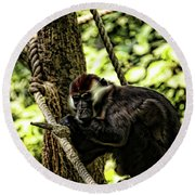 Red-capped Mangabey Round Beach Towel