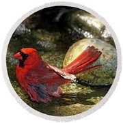Red Cardinal Bathing Round Beach Towel
