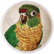 Green Cheeked Conure Round Beach Towel