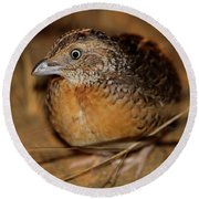 Red-chested Button-quail Round Beach Towel