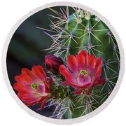 Red Claret Cup Cactus  Round Beach Towel
