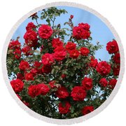Red Climbing Roses Round Beach Towel