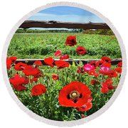 Red Corn Poppies At The Fence Round Beach Towel