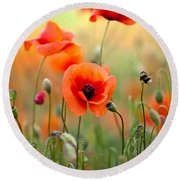 Red Corn Poppy Flowers 06 Round Beach Towel