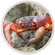 Red Crab, Christmas Island Round Beach Towel