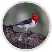 Red Crested Posing Round Beach Towel