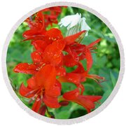 Red Crocosmia Lucifer Round Beach Towel