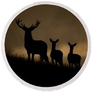 Red Deer At Dawn Round Beach Towel