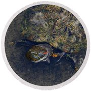 Red Eared Slider Turtle Round Beach Towel