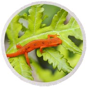 Red Eft Eastern Newt Round Beach Towel