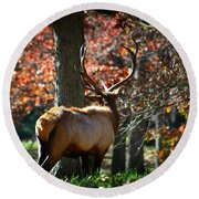 Red Elk Round Beach Towel