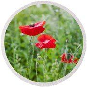 Red Field Poppies Round Beach Towel