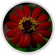 Red Flower 8 Round Beach Towel