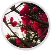 Red Flowers At Sunset Round Beach Towel