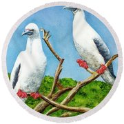 Red Footed Booby #255, Round Beach Towel