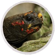Red-footed Tortoise Round Beach Towel
