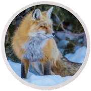 Red Fox At Dawn In Winter Round Beach Towel