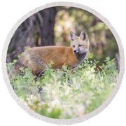 Red Fox Kit Looking For Mom Round Beach Towel