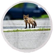 Red Fox Kit Standing On Old Road Round Beach Towel