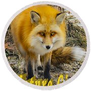 Red Fox Nature Girl Round Beach Towel