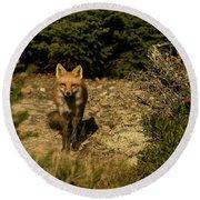 Red Fox Round Beach Towel