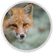 Red Fox Pictures 146 Round Beach Towel