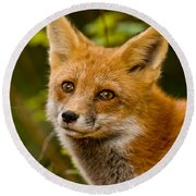 Red Fox Pictures 155 Round Beach Towel