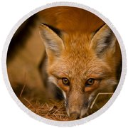 Red Fox Pictures 162 Round Beach Towel