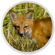 Red Fox Pictures 34 Round Beach Towel