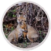 Red Fox Pictures 65 Round Beach Towel